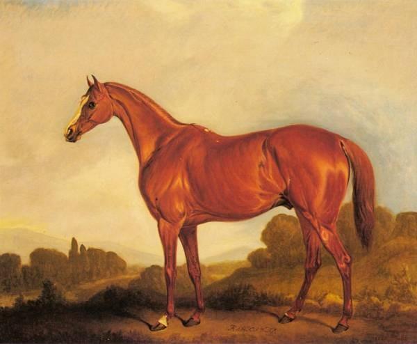 A Portrait Of The Racehorse Harkaway